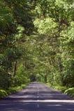 Tom landsväg i trädtunellodlinje Royaltyfri Foto