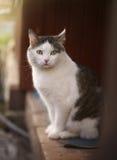 Tom męski kot siedzi na dom na wsi ganeczku Fotografia Royalty Free