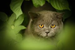 Tom male cat outdoor summer photo royalty free stock images