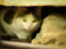 Tom male cat outdoor summer photo. Tom mail stray cat hide under house close up photo Stock Photos
