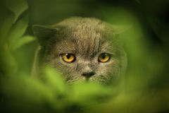 Tom male cat outdoor summer photo royalty free stock image