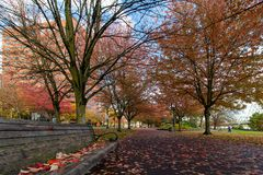 Tom McCall Waterfront Park in Fall season stock image