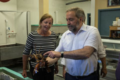 Tom Mulcair holds lobster on PEI Stock Photography