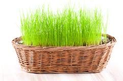Tom påskkorg med grönt gräs Arkivfoto