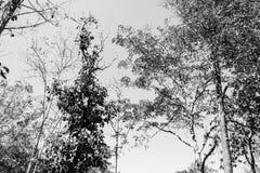 Tom preto e branco Fotografia de Stock
