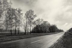 Tom väg för svart vit fotografibygd, skog för björkträd, molnigt väderlandskap royaltyfria foton