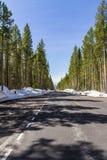 Tom väg inom den Yellowstone nationalparken royaltyfri bild