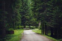 Tom väg längs träd i skog Royaltyfri Bild