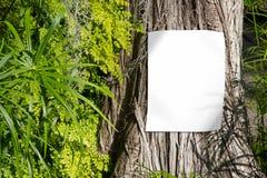 Tom vit affisch på trädstammen, tom teckenmodell med naturbakgrund arkivbild