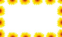 Tom vit sida som dekoreras med solrosor royaltyfria bilder
