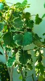 Toma de la planta en el sol Foto de archivo libre de regalías