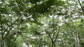 Toma panorámica alrededor del árbol verde del follaje en el parque público almacen de metraje de vídeo