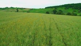 Toma panorámica de la visión aérea Visión baja sobre un paisaje verde con la hierba larga 4K almacen de metraje de vídeo