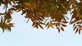 Toma panorámica en las hojas de otoño almacen de metraje de vídeo