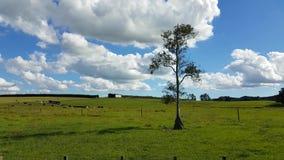 Toma panorámica lisa del día claro con nubes blancas y un árbol solo almacen de metraje de vídeo