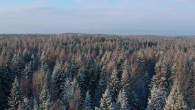 Toma panorámica sobre bosque nevoso del invierno almacen de metraje de vídeo
