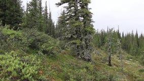 Toma panorámica tirada de árboles metrajes