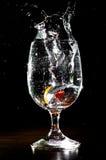 Tomaat die in glas vallen Stock Foto's