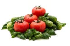 Tomaat en basilicum Royalty-vrije Stock Foto's