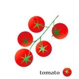 Tomaat Geïsoleerde groenten op witte achtergrond Stock Foto