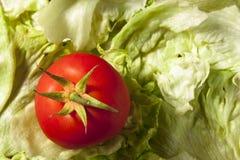Tomaat op Salade stock fotografie