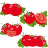 Tomaat Vastgestelde tomaten en peterseliebladeren groenten Royalty-vrije Stock Afbeelding