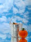 Tomaat in zilveren emmer Stock Afbeeldingen
