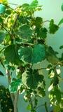 Tomada da planta no sol Foto de Stock Royalty Free