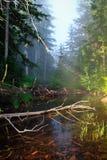 Tomada do lago tumble na névoa Imagens de Stock Royalty Free