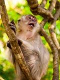 Tomadura de pelo haciendo el mono de las caras Fotografía de archivo