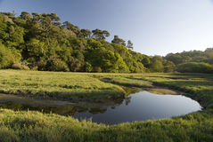 Tomales bay wetlands. Tomales bay state park, California royalty free stock images