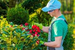 Tomando de plantas do quintal Imagem de Stock Royalty Free
