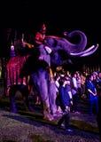 Tomando a foto com elefante Fotografia de Stock