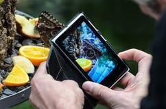 Tomando a imagem da borboleta com smartphone Fotografia de Stock Royalty Free