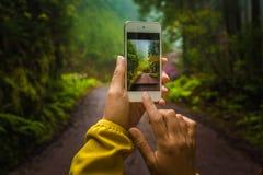 Tomando imagens com telefone Foto de Stock