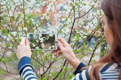 Tomando a imagens a flor branca com o telefone esperto móvel no fundo da natureza imagens de stock royalty free