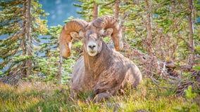 Tomando o fácil em um dia ensolarado agradável no parque nacional de geleira fotos de stock royalty free