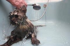 Tomando um banho fotografia de stock
