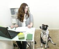 Tomando uma ruptura com um bom cão no trabalho de escritório imagens de stock royalty free