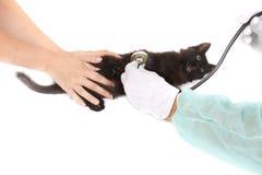 Tomar cuidado de un animal doméstico fotografía de archivo libre de regalías