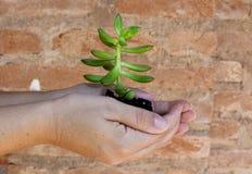 Tomar el cuidado de pequeñas plantas Fotos de archivo libres de regalías