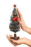 Tomar el cuidado del árbol de navidad Fotos de archivo