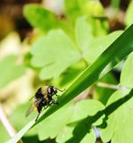 Tomar el sol la abeja Imagen de archivo libre de regalías