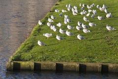 Tomar el sol pájaros Foto de archivo