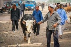 Tomar el toro para la venta Imagen de archivo libre de regalías