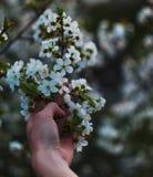Tomar la belleza foto de archivo libre de regalías