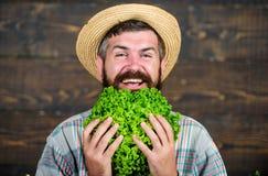 Tomar la decisión alimenticia comida estacional de la vitamina Verdura útil Festival de la cosecha Comida orgánica y natural Feli fotos de archivo libres de regalías
