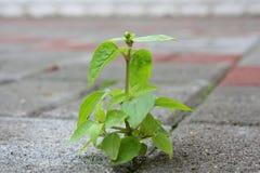 Tomar la raíz. Imagenes de archivo