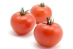 tomat Arkivfoton