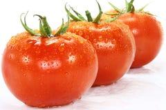 tomat Arkivbilder